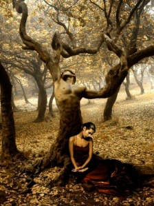 copaci-fara-padure-11_54fea719a50e6b