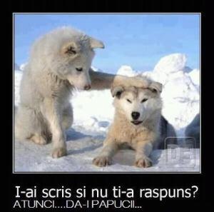 fun_da_i_papucii_si_ia_ti_adid